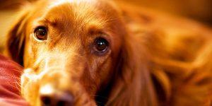 Гастрит у собак-как обнаружить, лечить и не допускать появления