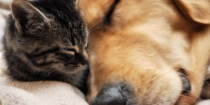 Как подружить собаку с кошкой в квартире — разбираем все ситуации