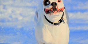 Как научить собаку команде «Ко мне» — советы кинологов