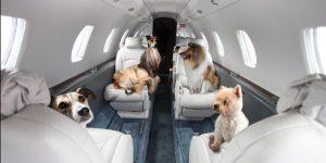 Правила перевозки собак по России — самолёт, поезд, автобус, общественный транспорт