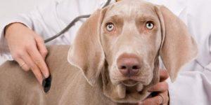 Рак у собак