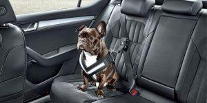 Как перевозить собаку в машине — этапы приучения и распространенные ошибки