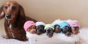 Как принять роды у собаки в домашних условиях без осложнений — советы ветеринаров